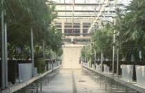 Humanitas360 Articulates Citizens' Actions that Save Cannabis Farm