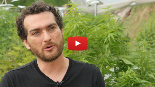 Cannabis Business: an Interview with Mauricio Garcia