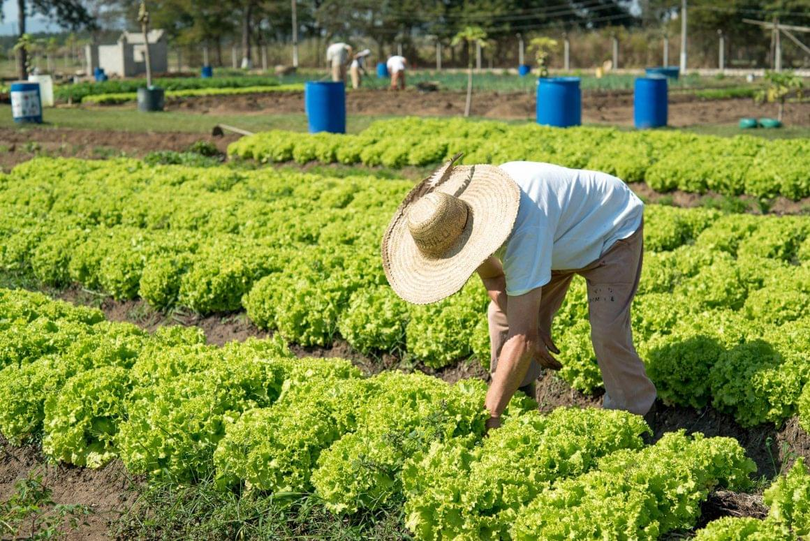 Humanitas360 fosters cooperative of inmates to produce organic foods