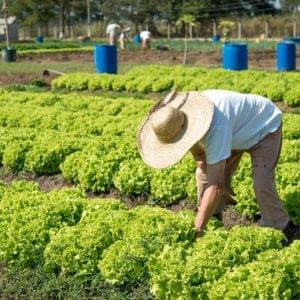 Humanitas360 fomenta cooperativa de detentos para produção de alimentos orgânicos