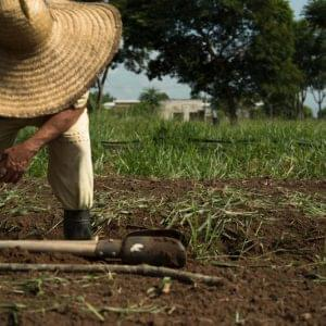 The cooperative of inmates in the Men's Penitentiary 2 in Tremembé receives an irrigation system to grow organic produce