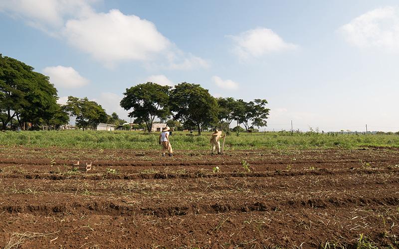 A horta orgânica produz plantas alimentícias não-convencionais